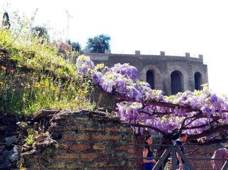 Forum Flowers